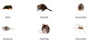 pack-rat-removal-critter-control