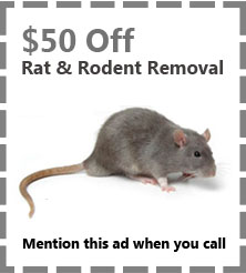 rat-and-rodent-removal-coupon-critter-control-fort-lauderdale-fl